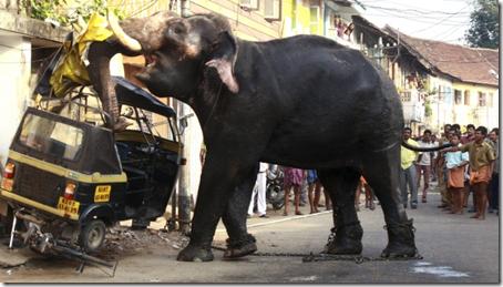 elephant-rampage-india