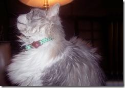 sassy-cat