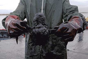 bird_oil_spill_victim